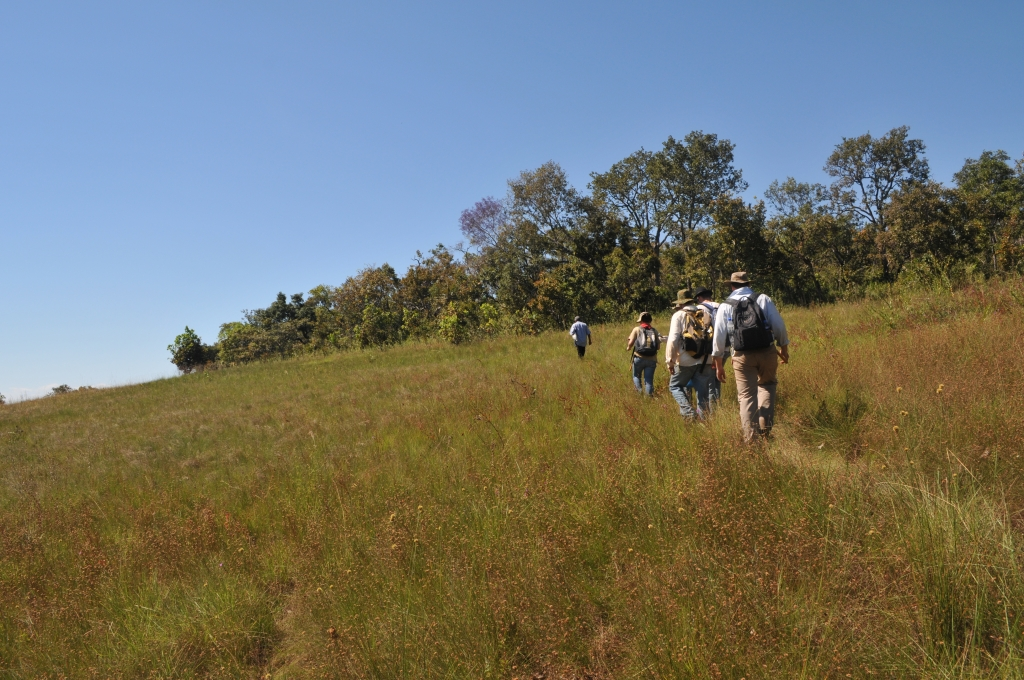 June/2011 field work - Trail to Cambambe Hill, Chapada dos Guimarães -MT